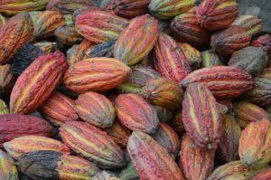 cocoa bean donkey milk chocolate marialuisa