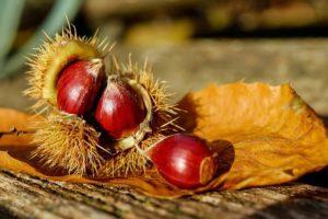 Chestnut honey fattoria donna tina