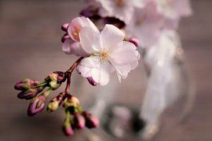 Cherry Honey fattoria donna tina