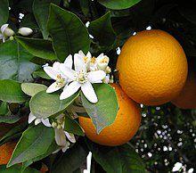 Miele di Arancio Fattoria Donna Tina
