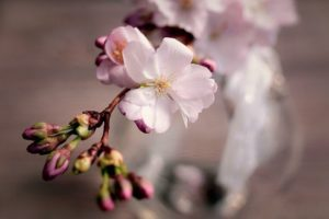 miele di ciliegio fattoria donna tina